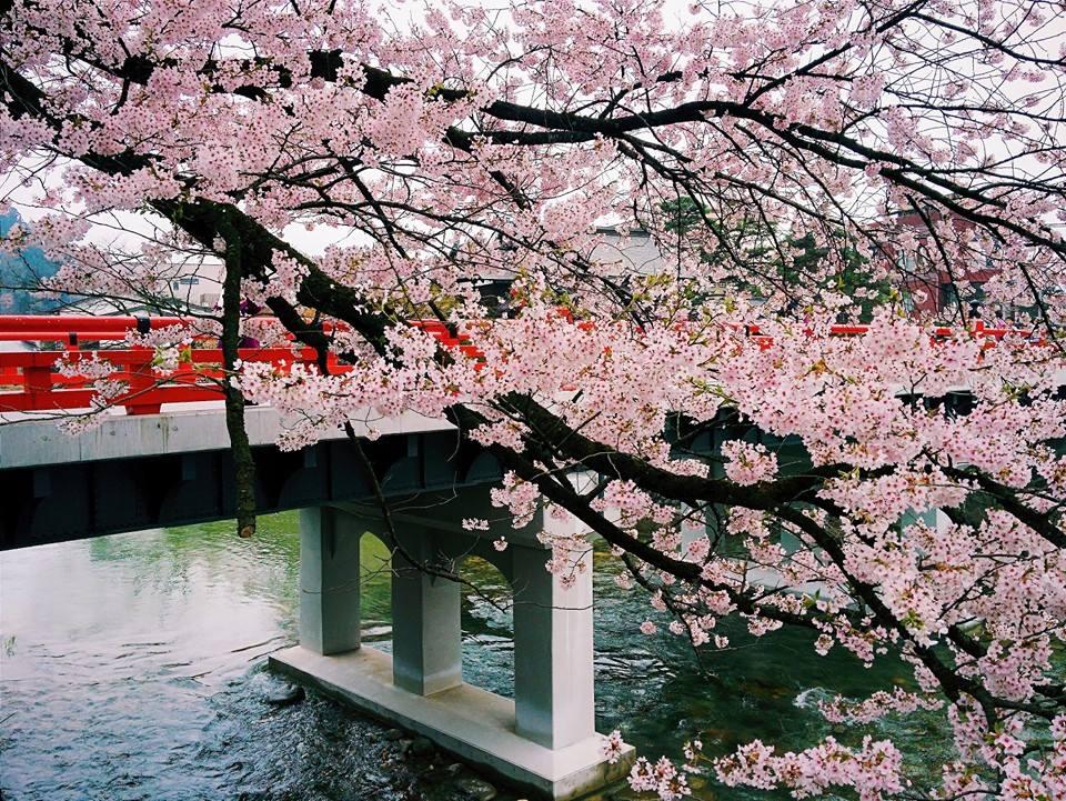 Apple «переезжает» в Японию